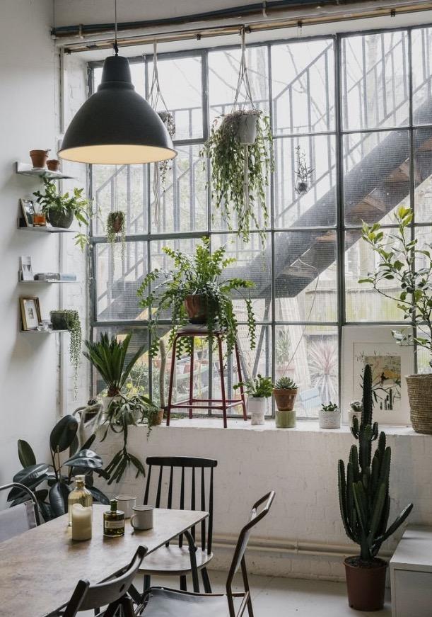 Scandinavian_hom_plants
